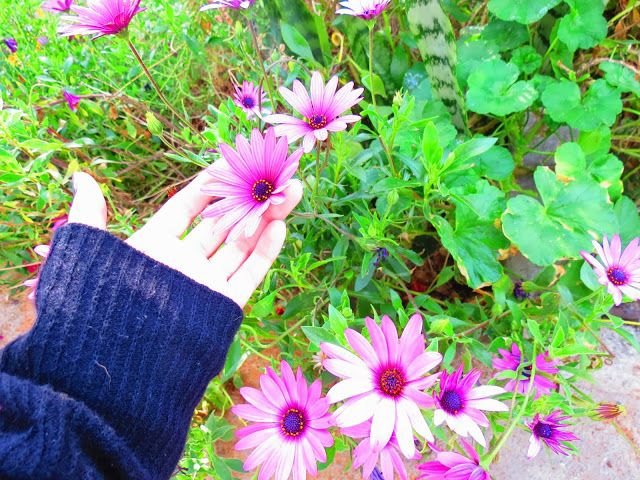flores de valparaiso
