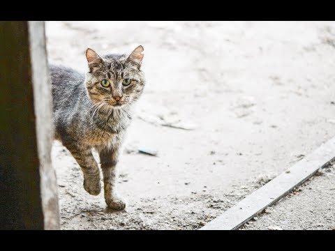(56) How to groom a feral cat, starring Grandpa Mason
