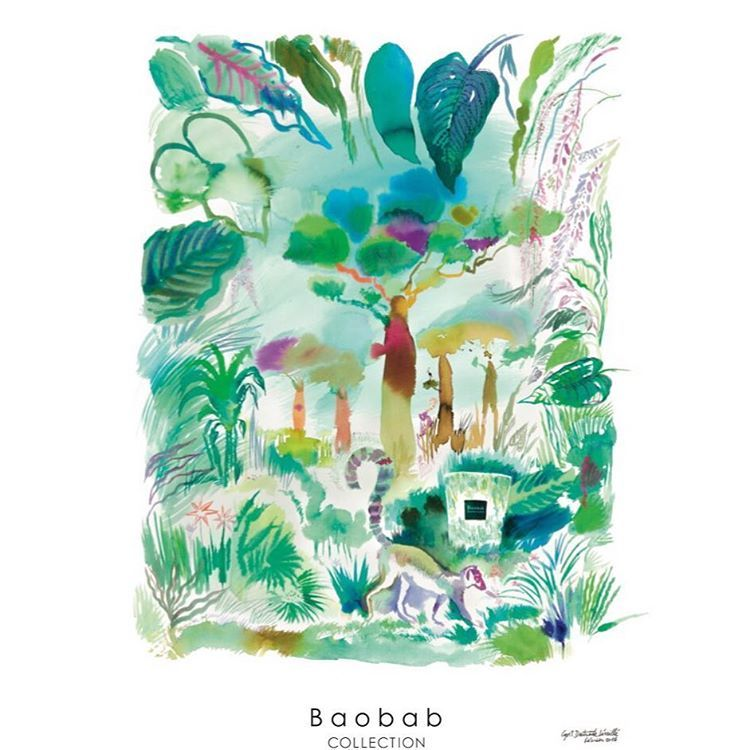 Eden Forest Scented Candles By Baobab Collection Eden