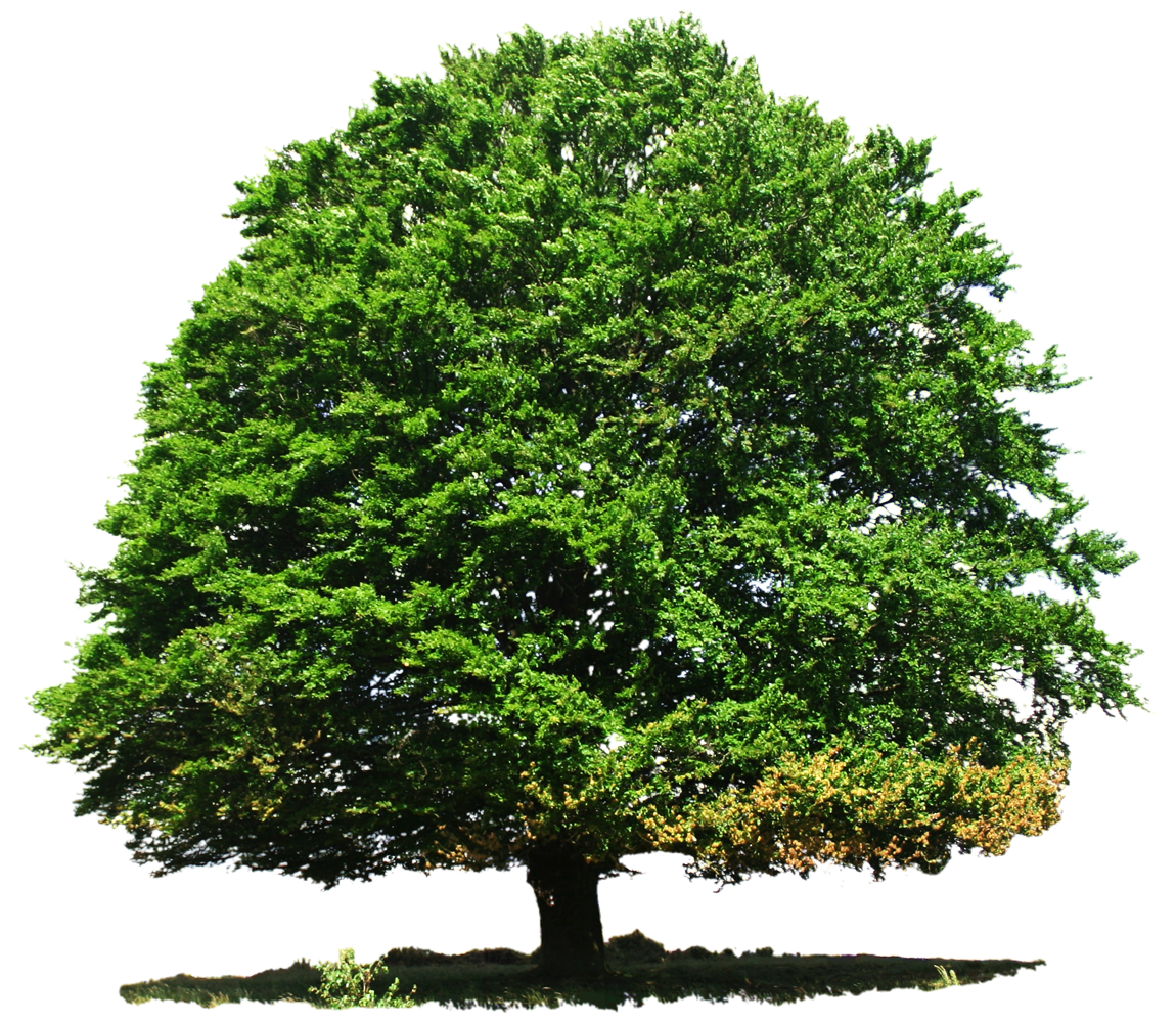 Tree Png Transparent Png Image Trees Top View Tree Photoshop English Oak Tree