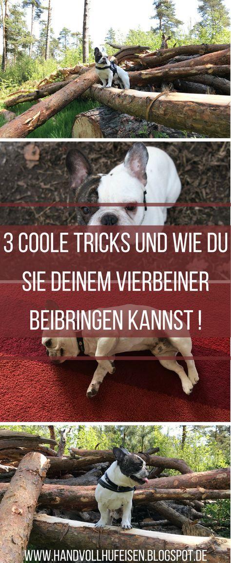 Ihr Braucht Unbedingt Noch Susse Tricks Fur Euren Hund Dann Seid Ihr Hier Richtig Wir Zeigen Euch Drei Coole Tricks U Hundetricks Hunde Welpen Erziehung Hunde