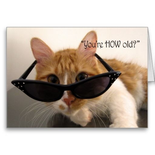 Birthday Humor You Re How Old Cat Card Zazzle Com In 2020 Old Cats Birthday Humor Cat Cards