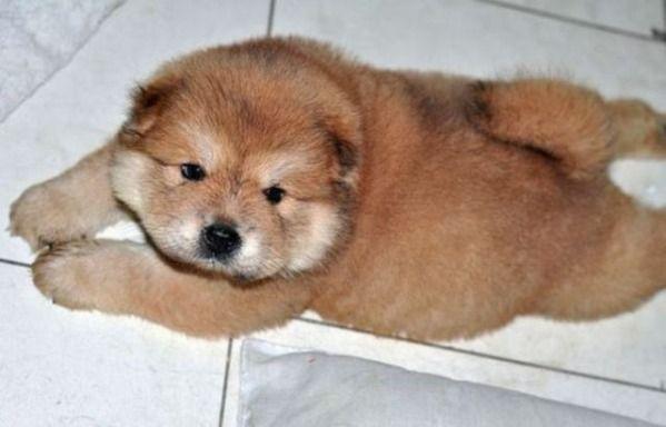 Fantastic Real Chubby Adorable Dog - d88cc2bba0679e770df7e53dc986587c  2018_515896  .jpg