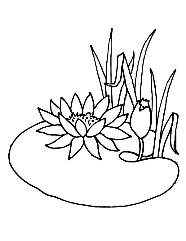 Lotus Flower Growing In The Pond Coloring Pages Jpg Jpeg Image Flower Coloring Pages Coloring Pages Super Coloring Pages