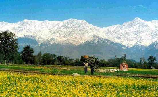 Magestic Kangra Valley II >>>  Visit the nature blessed valley and mountains of Dharamshala at Kangra and praise the bounty of mother nature. Bringing you the best of Kangra.  #camping #treks #trekking #MagesticKangraValley