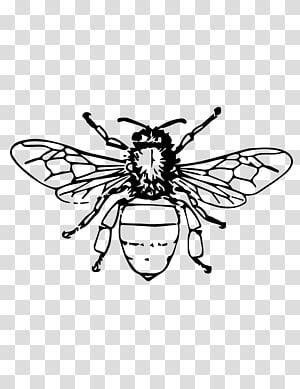 Honey Bee Beehive Queen Bee Beekeeping Bee Transparent Background Png Clipart Honey Bee Drawing Bee Drawing Bee Painting