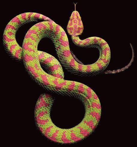 Viper mit schönem Muster in grün und pink