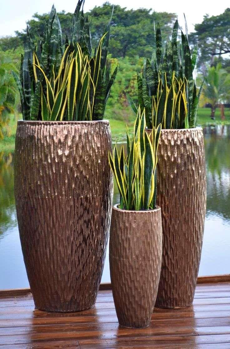 plant-and-black-pot-plants-color-modern-indoor-pots-for-plants-ideas ... for Indoor Potted Plant Ideas  545xkb