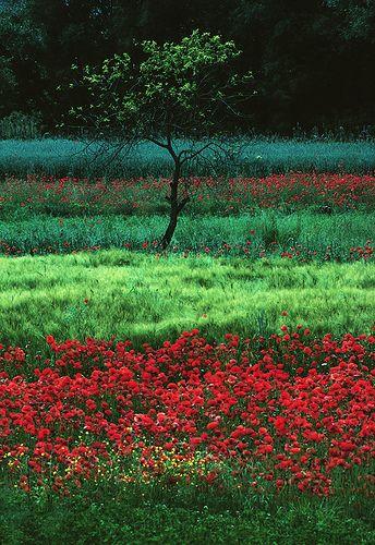 campi a Prezza by paraluci, via Flickr Poppy field , Italy