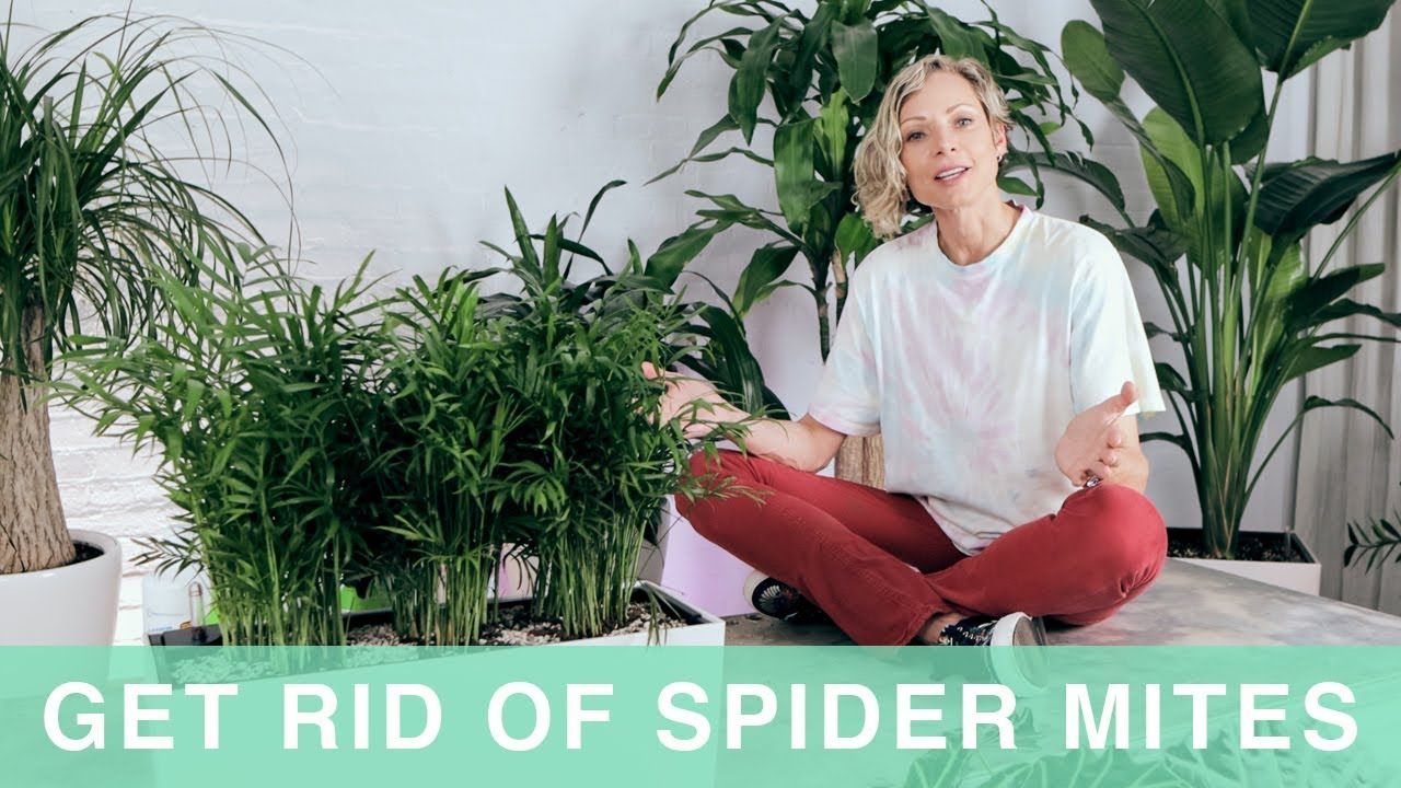 How to get rid of spider mites on houseplants in 2020