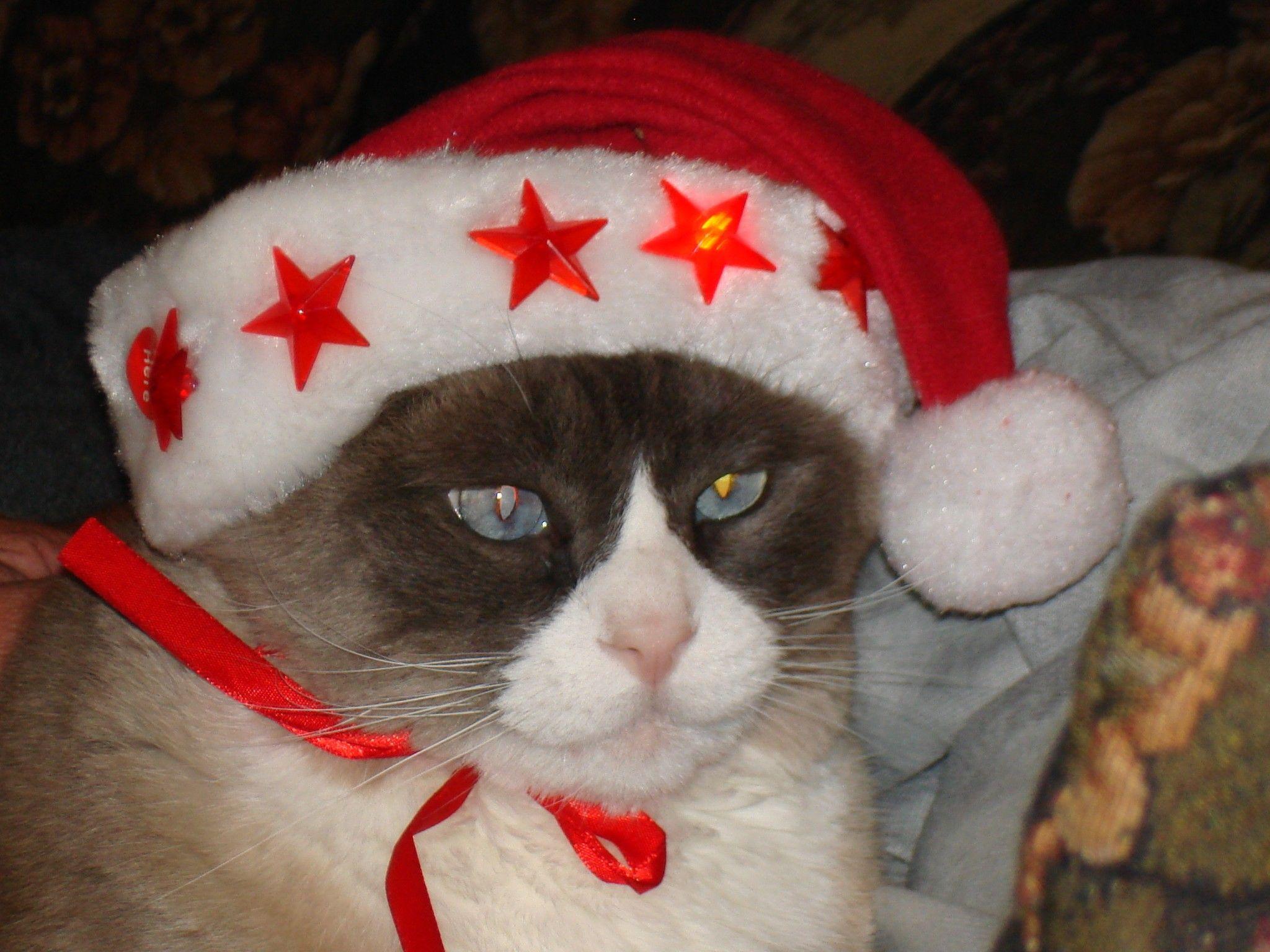 Dawnee's cat! Play PetRescueSaga now > http//to.king