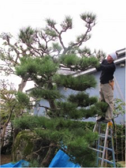 How to Add Japanese Garden Design Principles Into Your ...