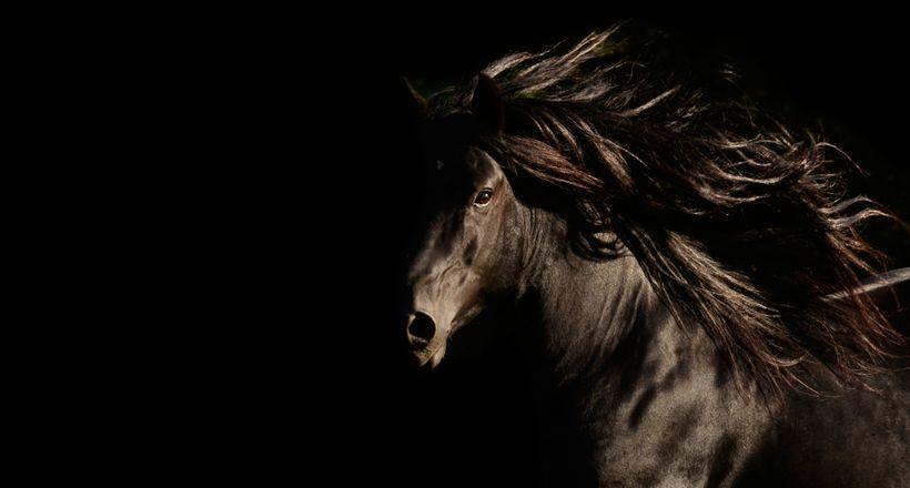 Spirit HorsesTony Stromberg Fine Art Equine Photography Equus