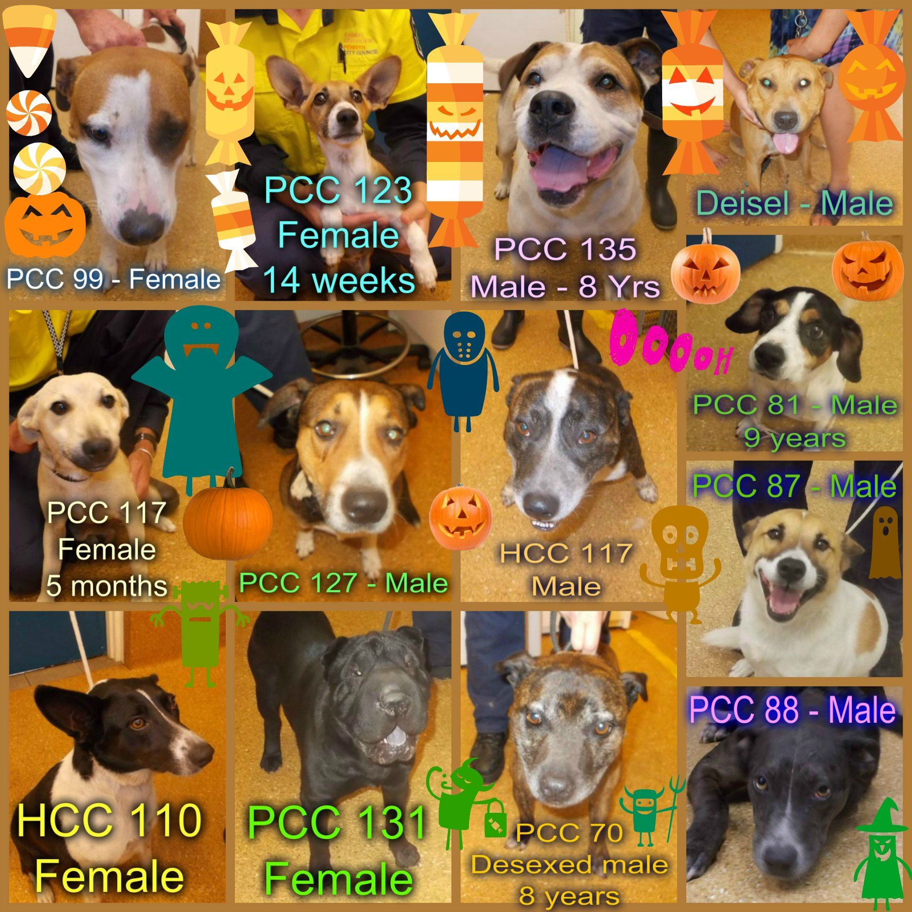 These Dogs Which Include 3 Seniors Need A Rescue Or Adoption Asap If You Are A Rescue Or Know A Rescue That Can H Puppy Adoption Pet Adoption Animal Shelter