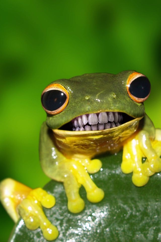 Green Yellow Frog With Teeth Background Peculiarities