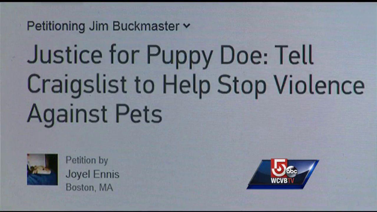 Puppy Doe Kiya Petition Abc News Center 5 Boston Massachusetts Abc News New Center Abc