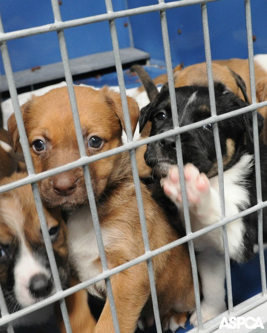 Maine Poised To Make History In Fight Against Puppy Mills Puppies My Animal Puppy Mills