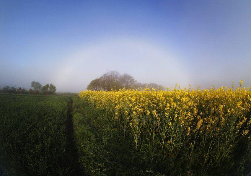 Nebelbogen in der Bretagne: Weiße Bögen sind deutlich seltener als bunte.