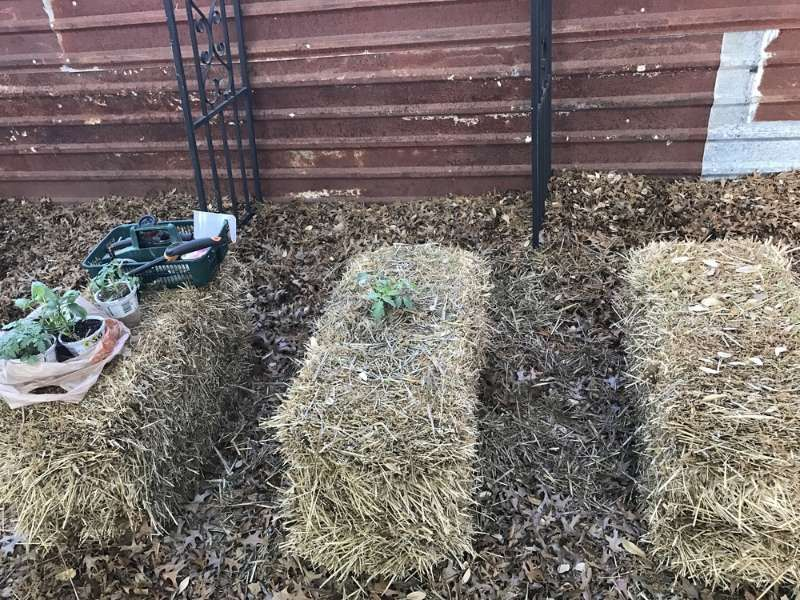 d8904f9e3b94d342cd3af83aca3f6f3e - Hay Bale Gardening Effortless Food Production