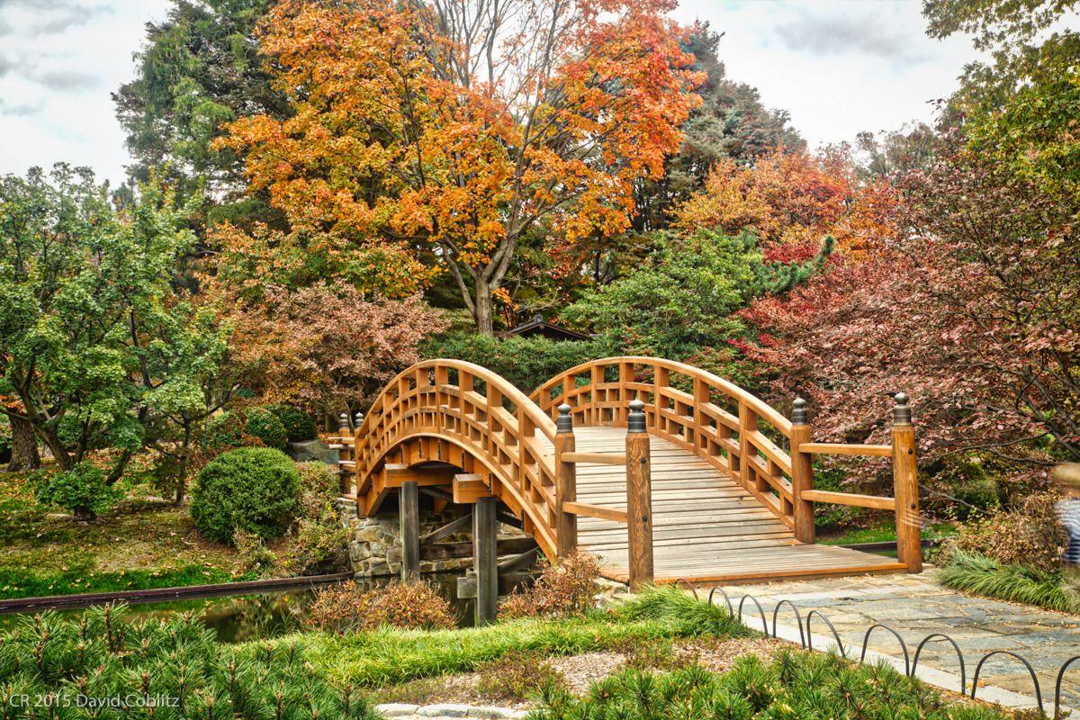 Japanese Garden Bridge Japanese garden, Garden bridge