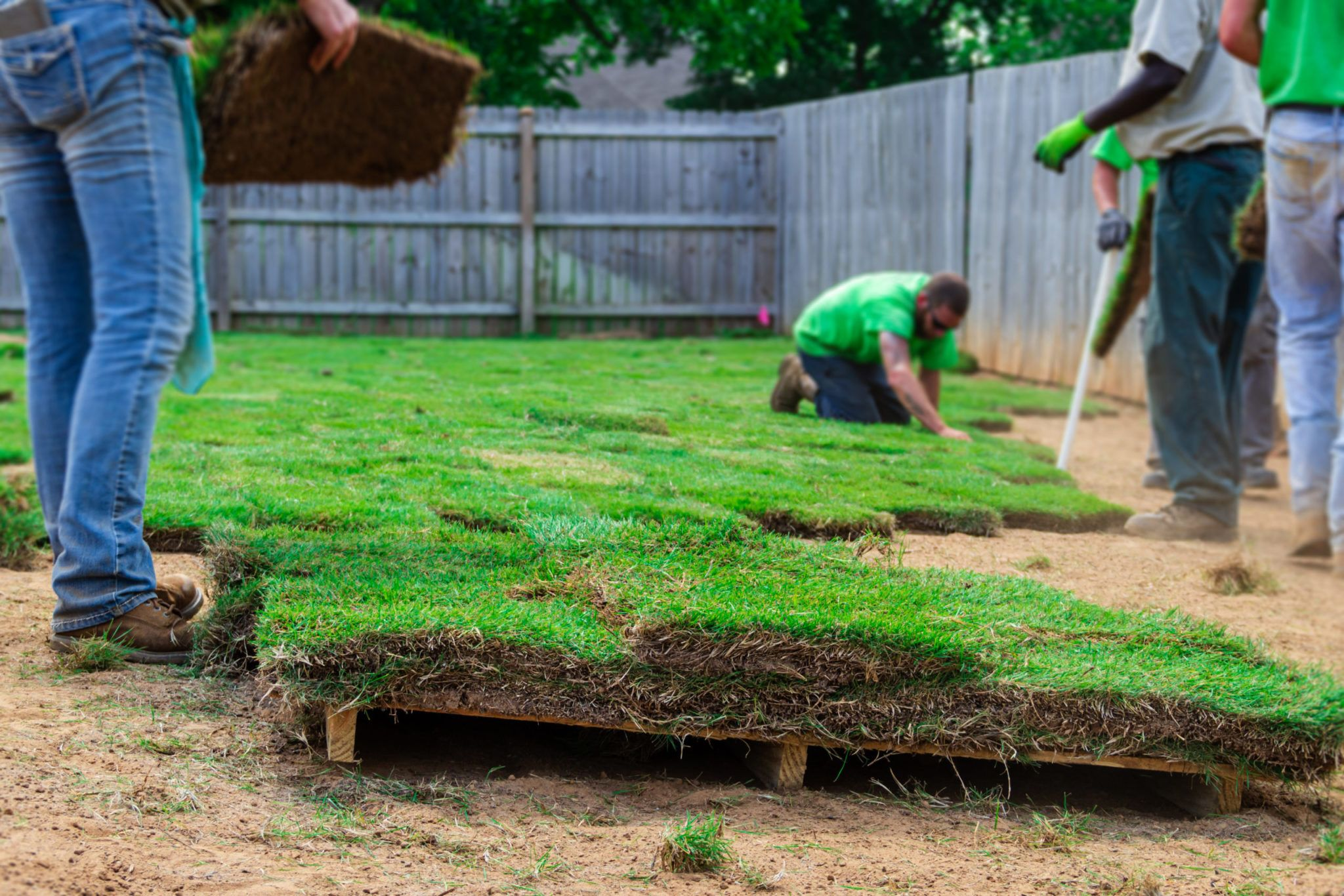 How to Get Your Newly Sodded Lawn Off to a Healthy Start