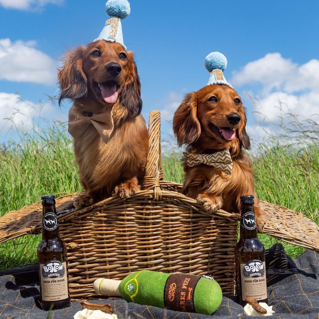 Everything You Need To Know About A Dachshund Dachshund Dogs Cutepuppies Dogbeast Dachshund Dapple Dachshund Hound Dog Breeds