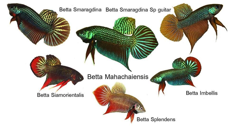 ป กพ นโดย Tikta ใน ปลาก ด ปลาก ด