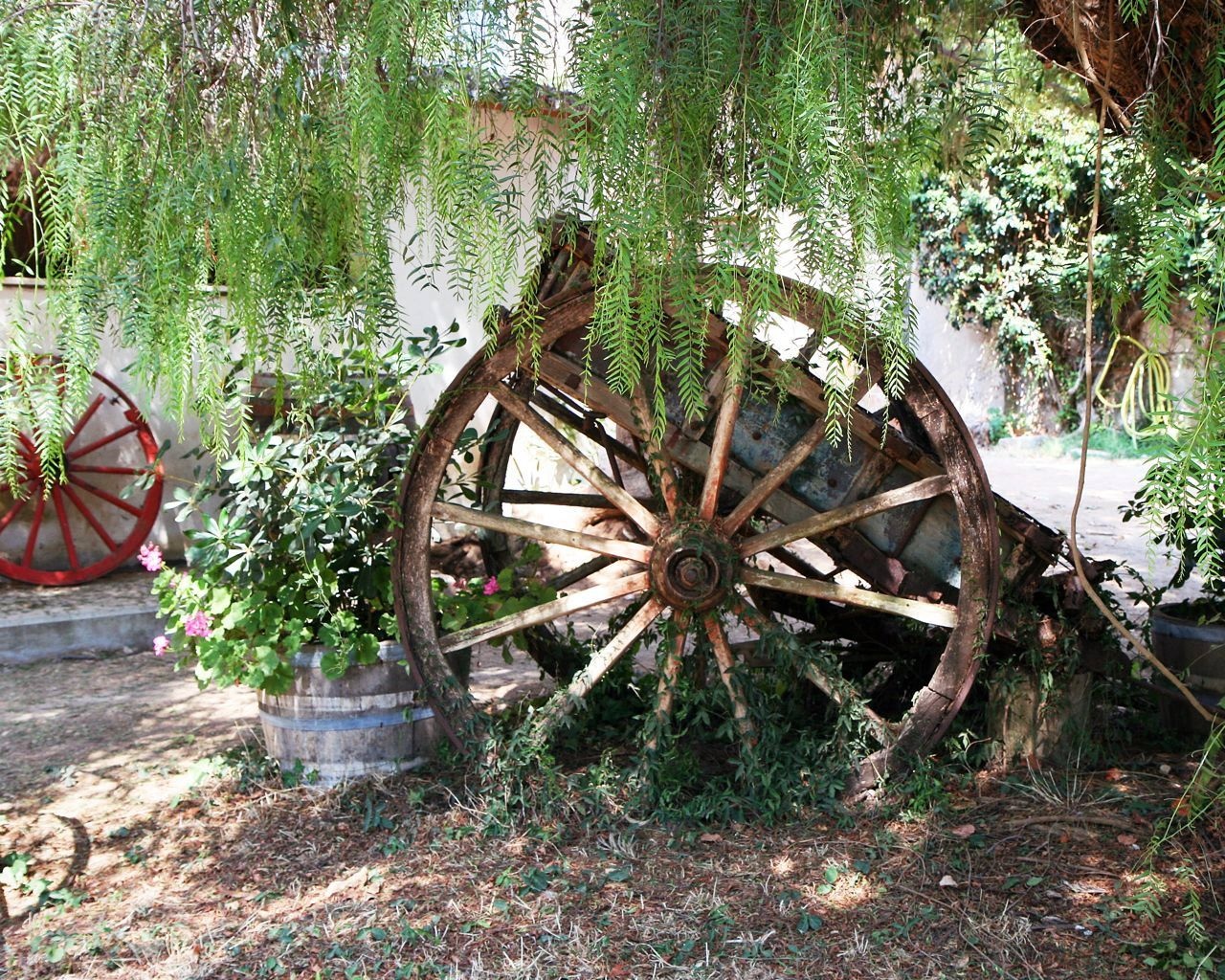 Rustic Decor   Wagons And Wheels Print Wine Country Wall Art Olympia Greece  Photography Red Green Brown Old Wooden Farmhouse Print