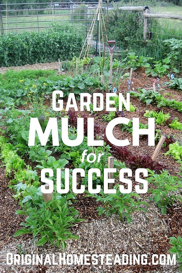 Mulch For Gardening Success Best Garden Mulch With Images Garden Mulch Garden Amazing Gardens