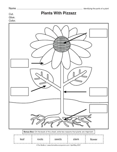 Parts Of A Flower Worksheet Science Kindergarten