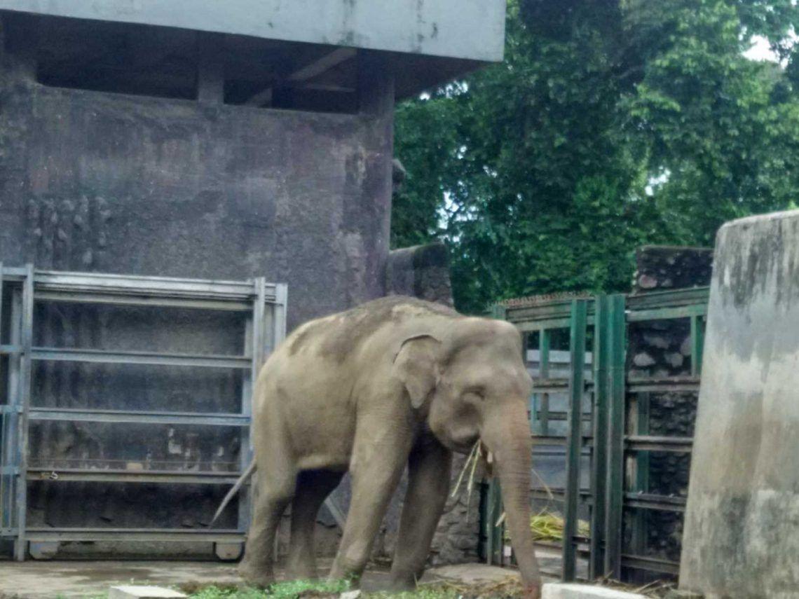 Kebun Binatang Gajah