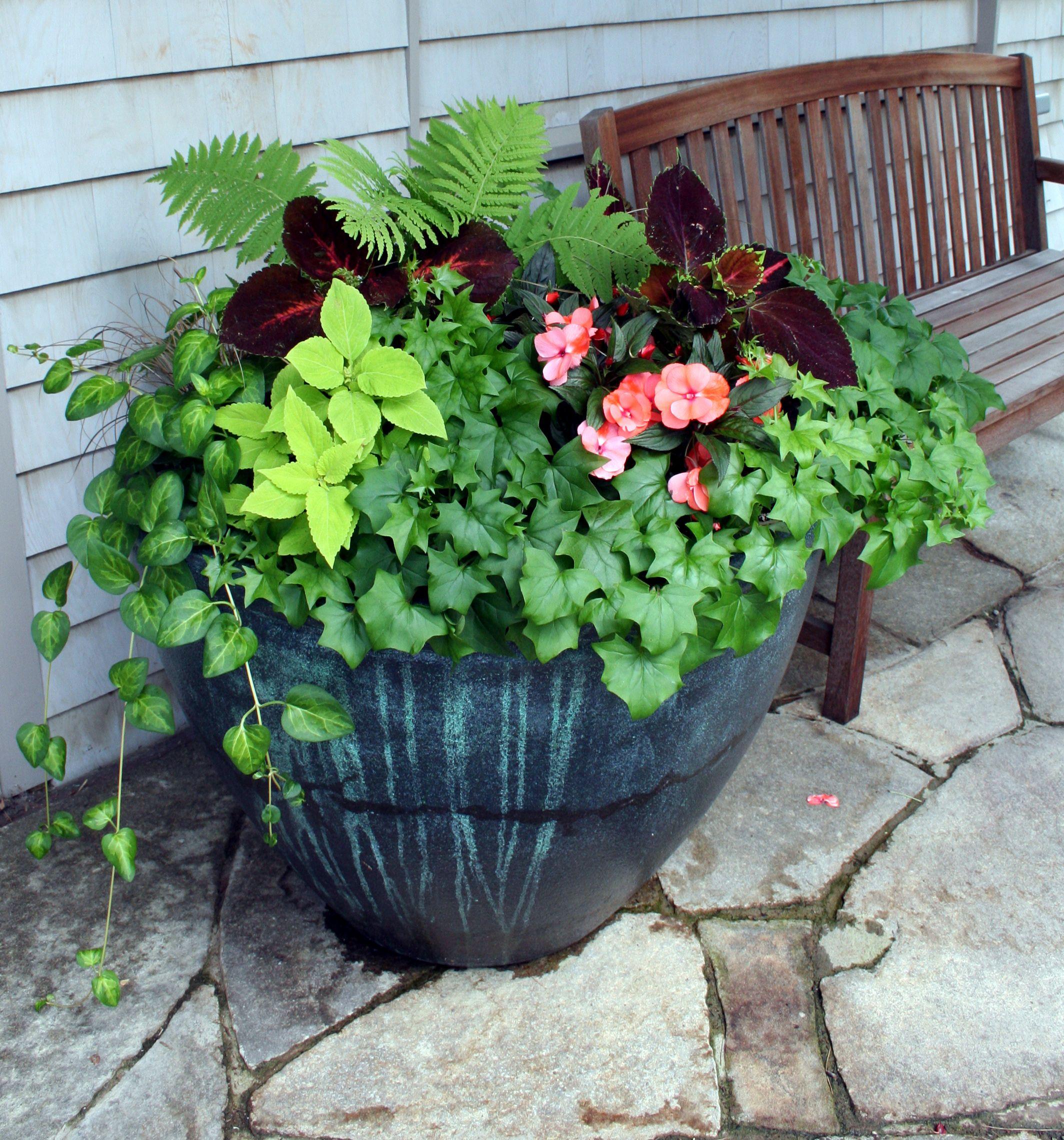Container Garden Combinations