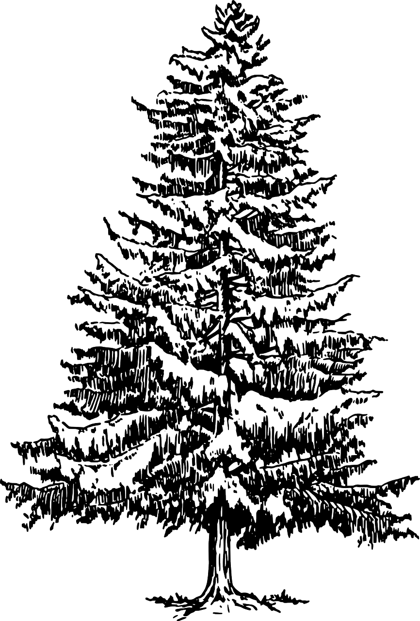 How To Draw A Christmas Tree Stencil 1 Pine Tree Drawing Pine Tree Art Tree Drawing