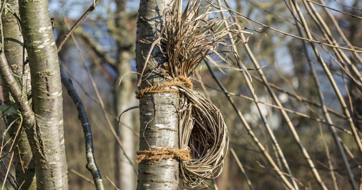 So bauen Sie eine natürliche Nisthilfe für Rotkehlchen