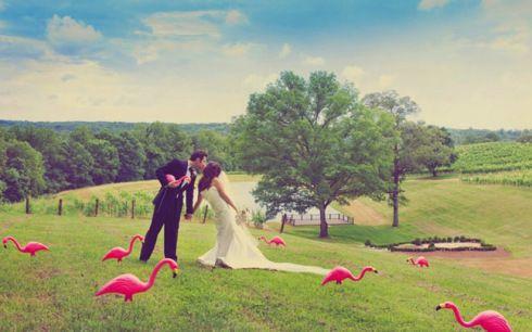 flamingos?!?