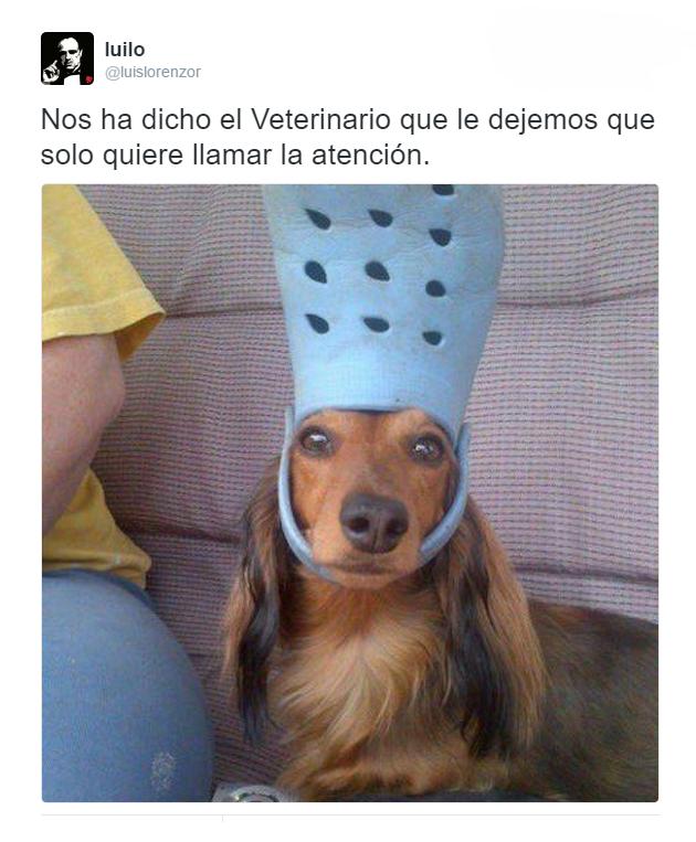 Fotos Divertidas Para Whatsapp Memes Chistes Chistesmalos Imagenesgraciosas Humor Funny Dog Memes Funny Animal Memes Cute Funny Animals