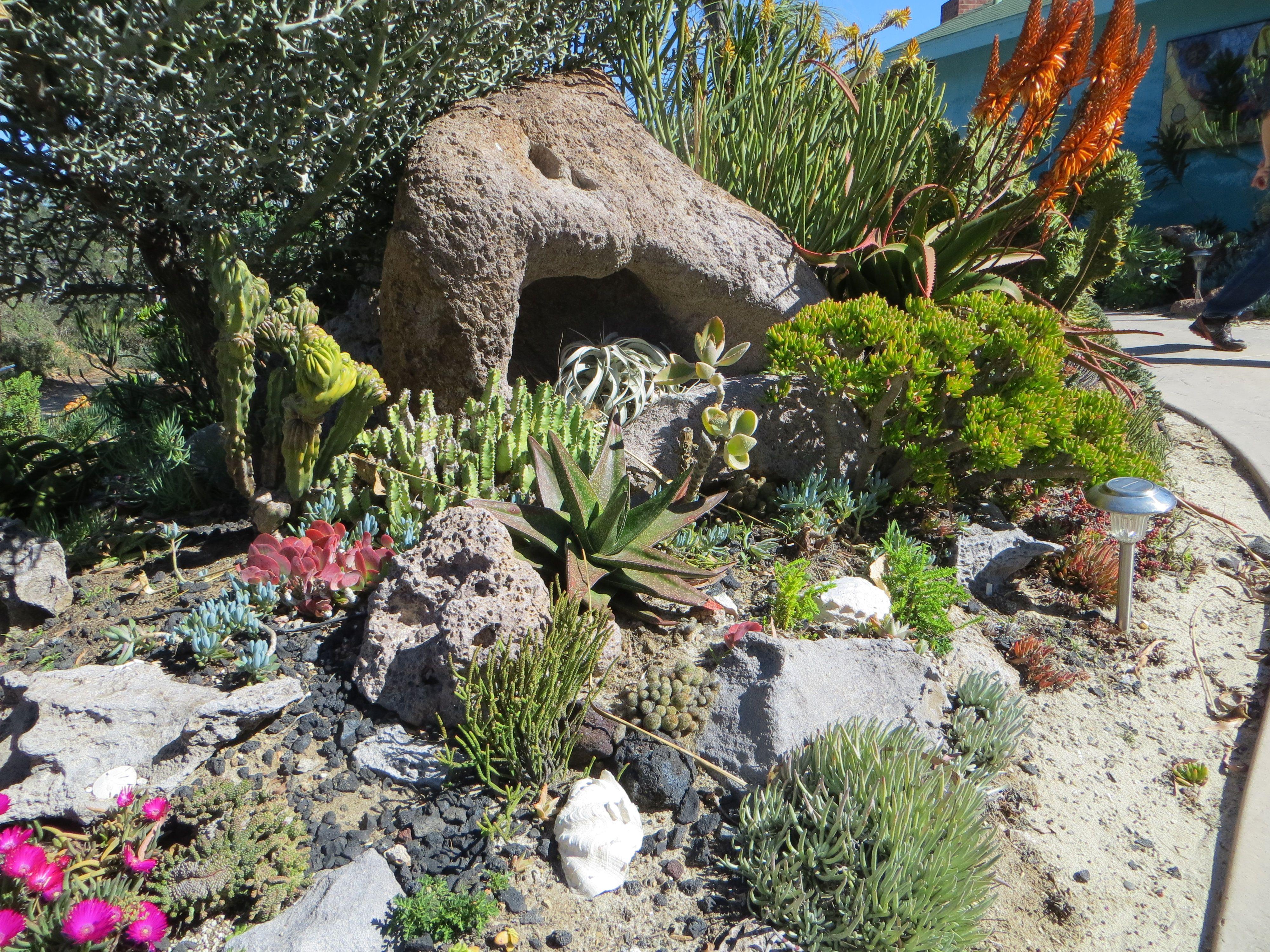 kalanchoe thyrsiflora succulents pinterest