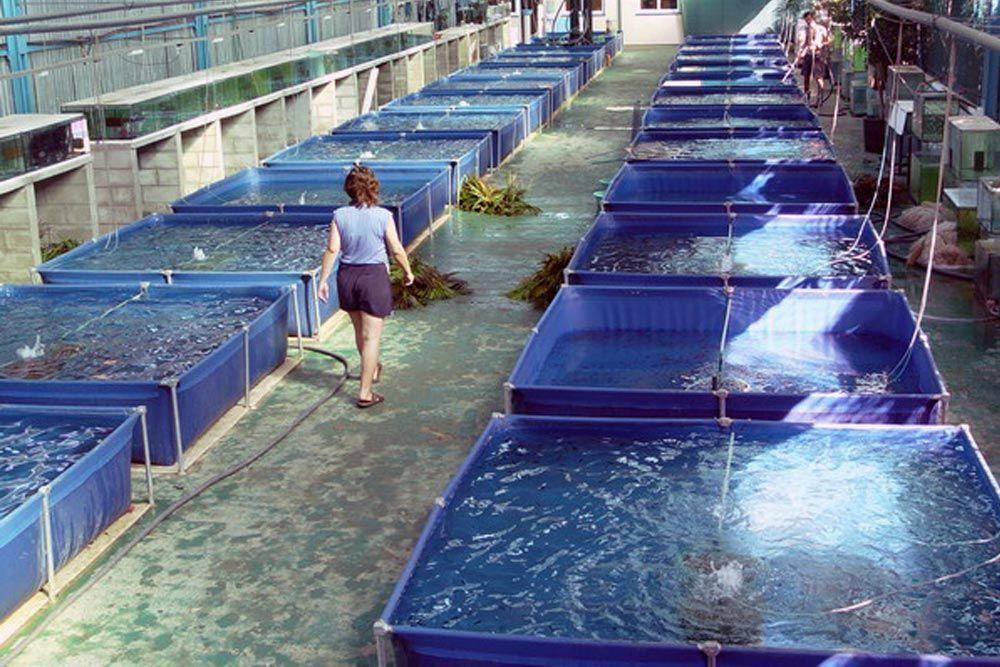 Piscinas cuadradas en recinto de piscicultura interior