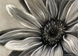 Daisy Flower Line Drawing : Charcoal sketches of flowers drawings