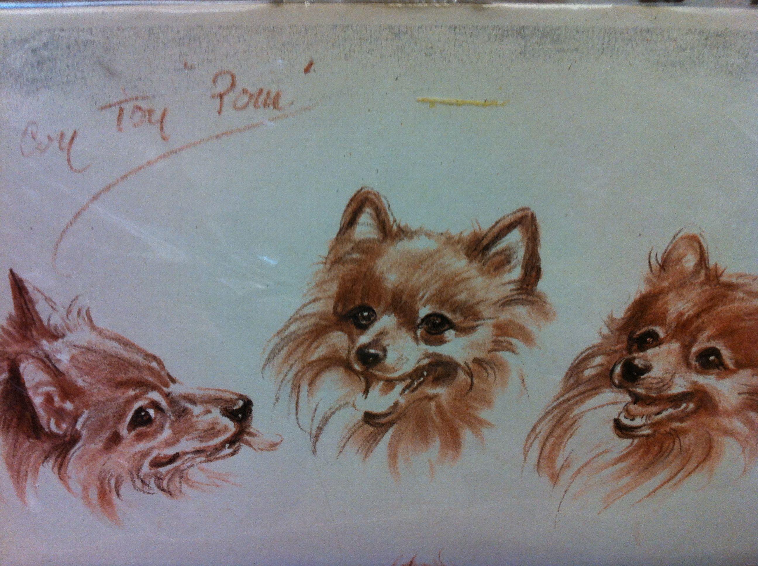 Pomeranian sketches   Pomeranian love   Pinterest   Pinturas de ...