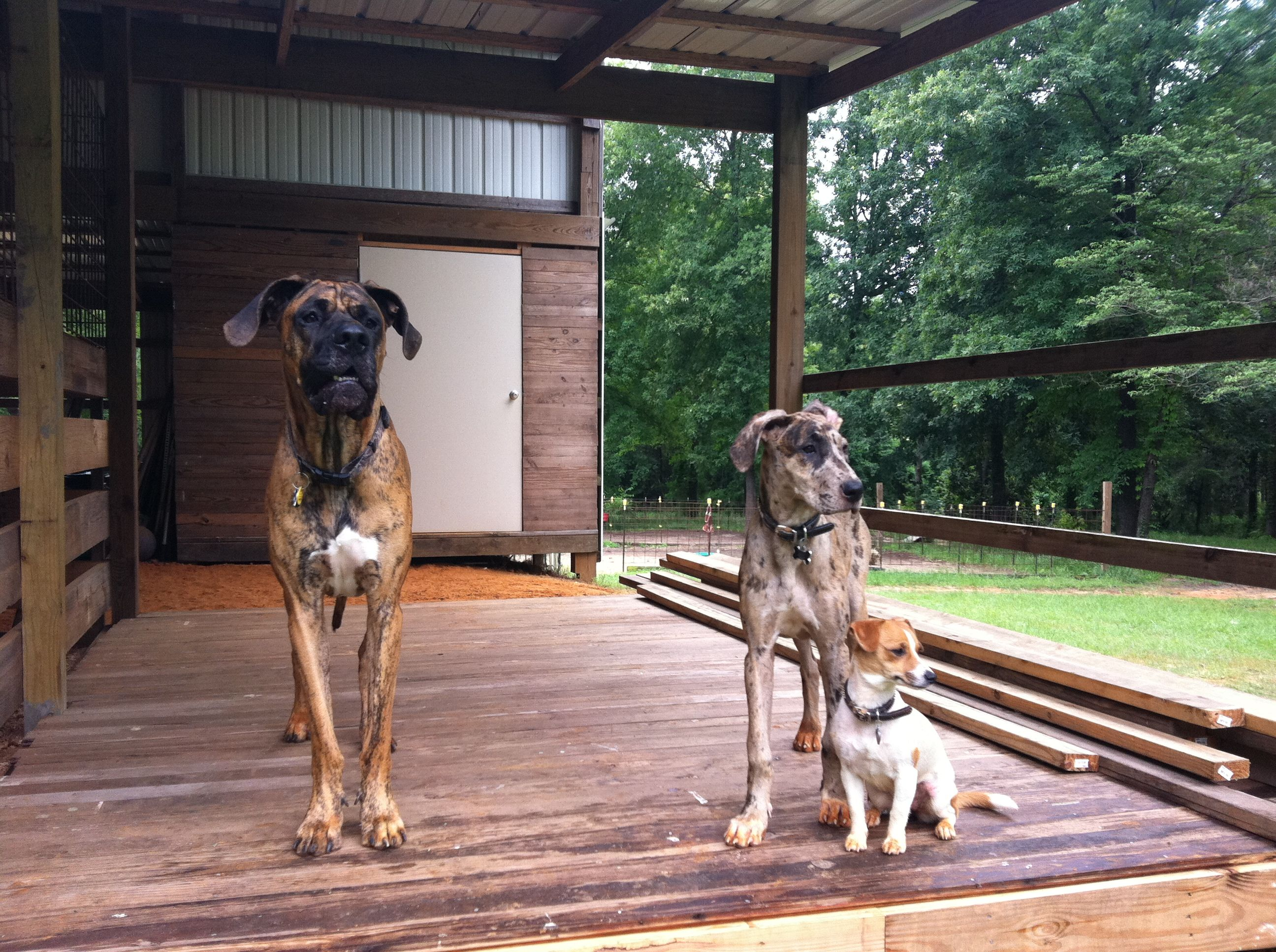 Jake,Harley, and Dixie