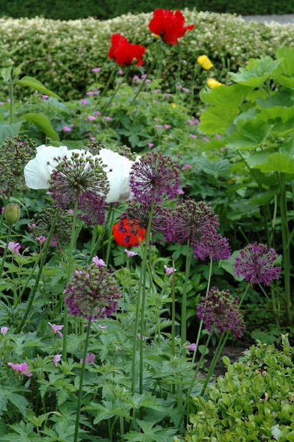 Purple alium - good with red and orange