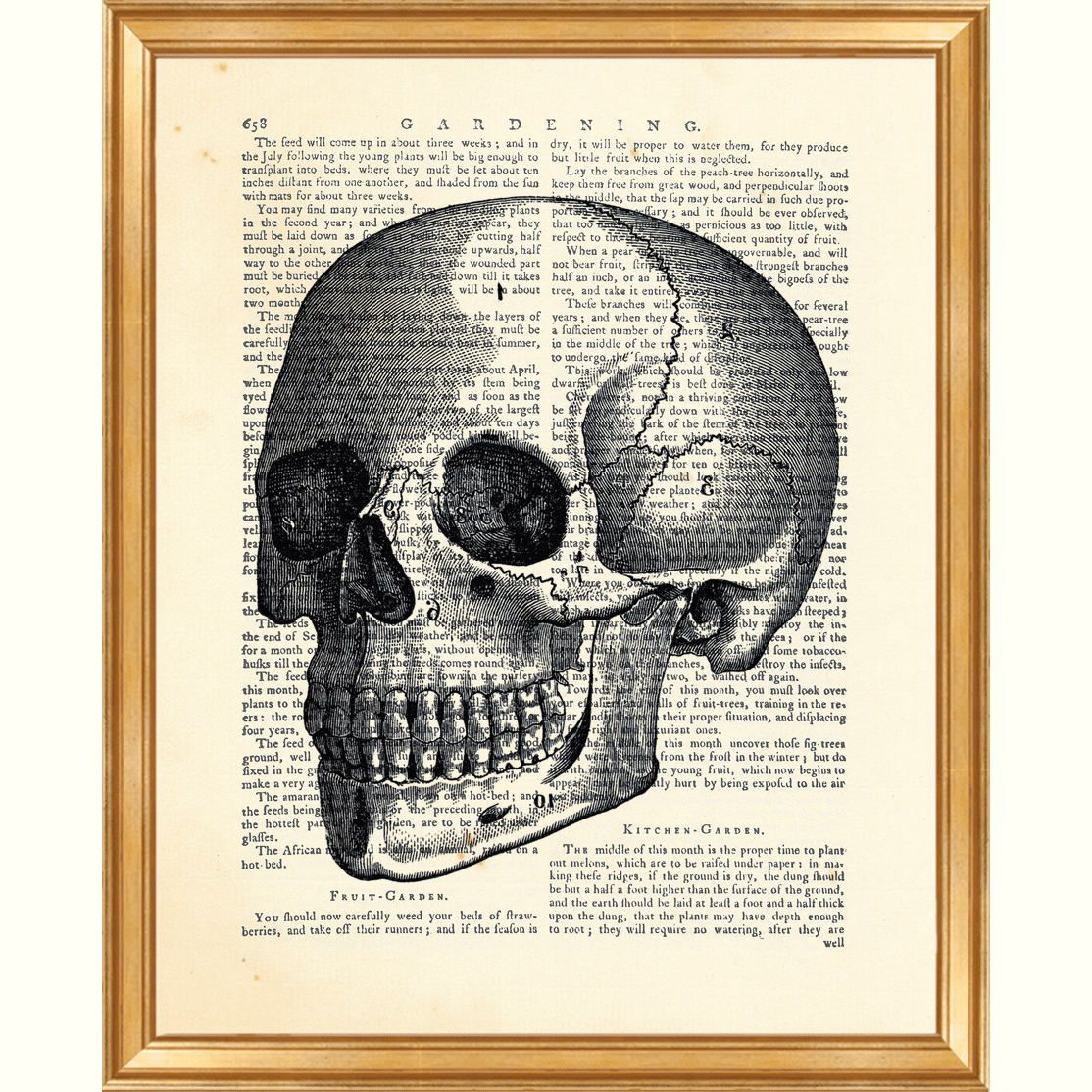 Skull Wall Art, Anatomy Art, Dictionary Art Print, Anatomy Poster ...