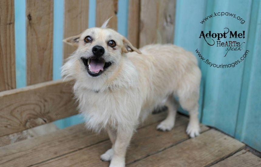 Pet adoption in kansas city area