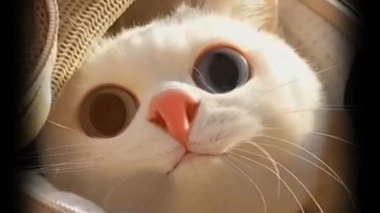 Funny Cat And mirror Video|Funny video|Whats App Videos|30
