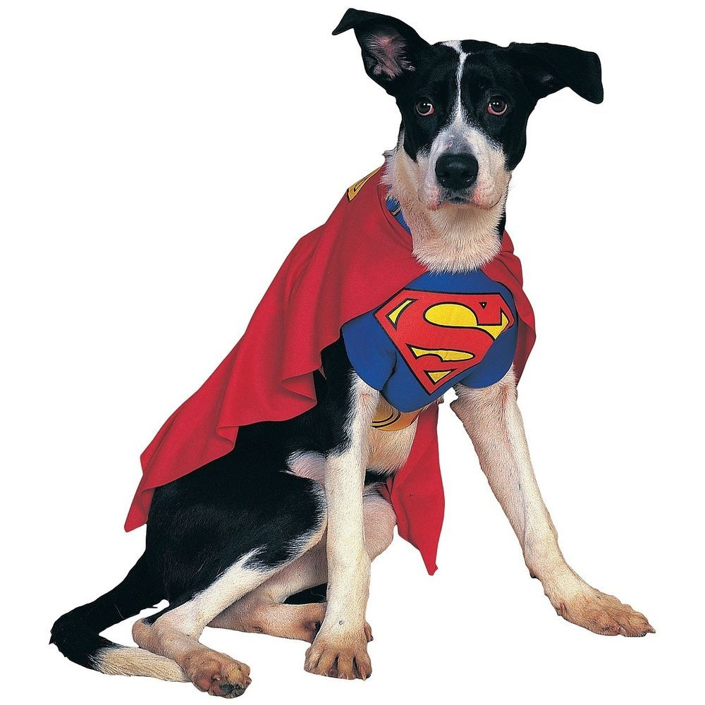 Details About Superman Dog Costume Superhero Pet Halloween Fancy
