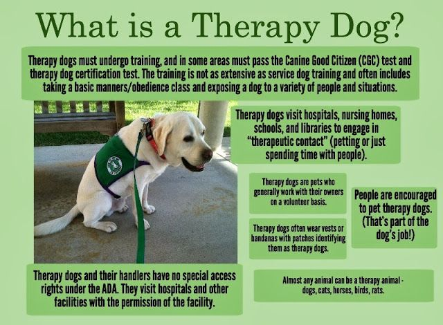 Sunday Service Dog Blog Hop Therapy Dog Faqs With Images