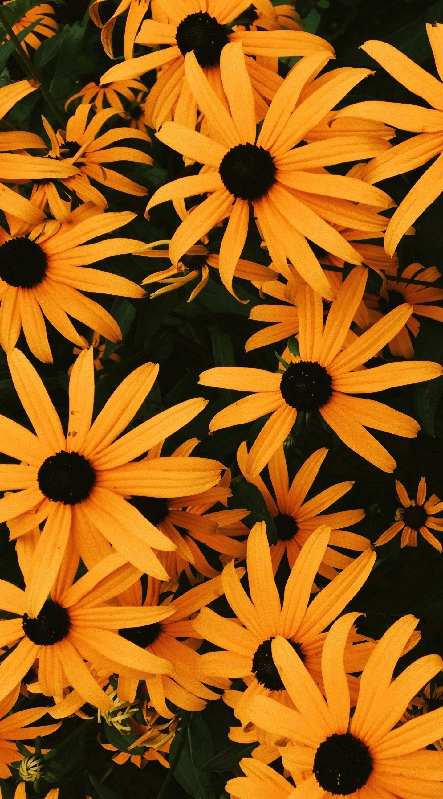 Pin By Paige Jewell On Phone Backgrounds Fall Wallpaper Tumblr Sunflower Wallpaper Fall Wallpaper