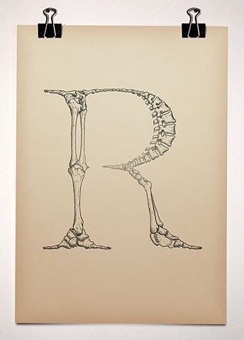Letter R Typeface Anatomy By Bjorn Johansson