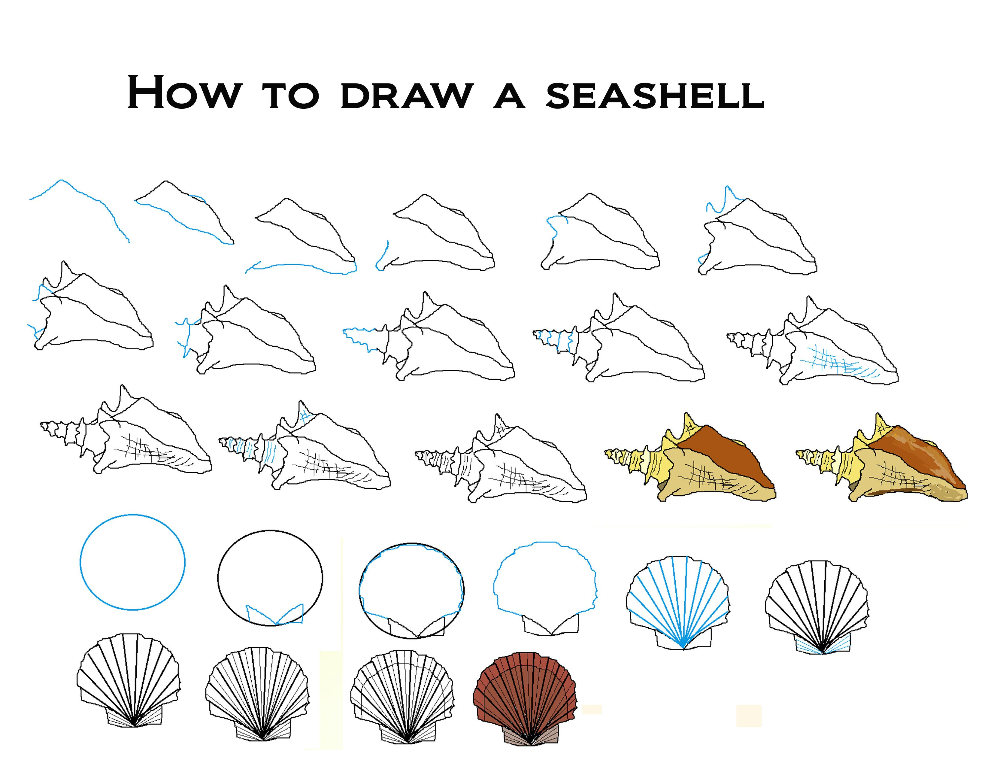 How To Draw Seashells With Images